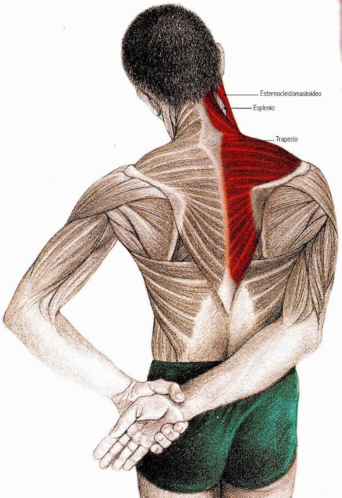 Lee más sobre el artículo Ejercicios para aliviar el dolor de cuello y hombros